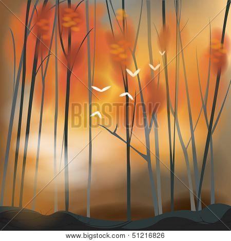 Barren Forest Background In Sunset Scene