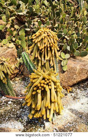 Cactus In Nong Nooch Tropical Botanical Garden, Pattaya, Thailand.