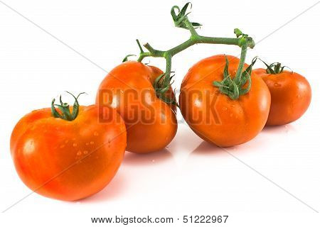Four Tomatoes With Petiole