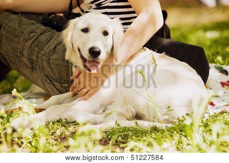 Beige Labrador lies near breeder on the green grass