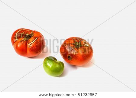 Two Rotten and One Green Tomato