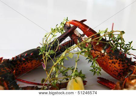 Big King Lobster