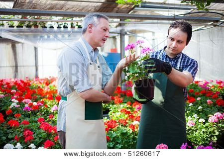 Portrait of a smiling greenhouse workers holding flower pots