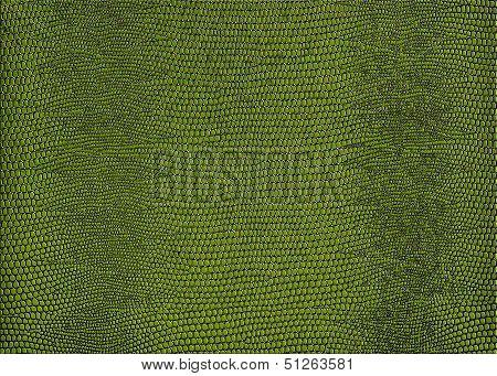 Snakeskin Print In Green