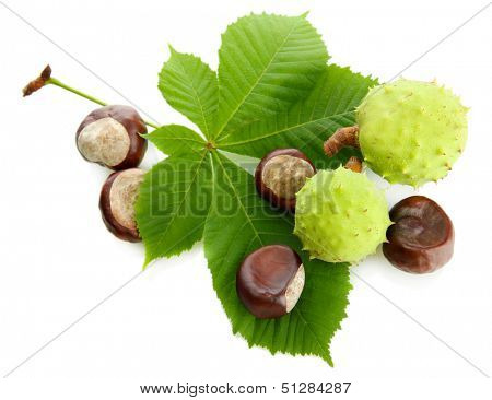 Chestnuts with leaves, isolated on white