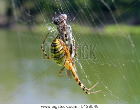 Spider And Its Victim
