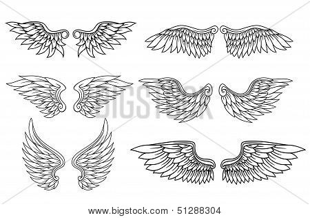 Set of eagle or angel wings