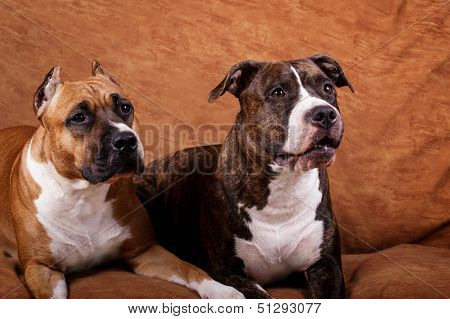 Two young dogs