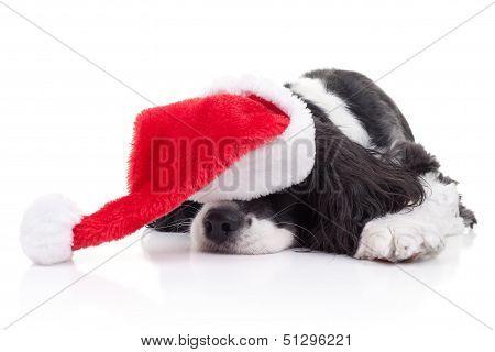 Dog Christmas Dreams