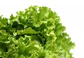 stock photo of romaine lettuce  - isolated detail of lettuce - JPG