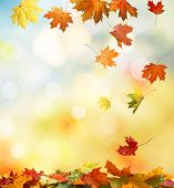 foto of blinking  - autumn background - JPG