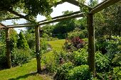 picture of pergola  - Wooden pergola gazebo in a beautiful blooming garden full of flowers and green plants - JPG