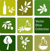 stock photo of olive shaped  - vector collection - JPG