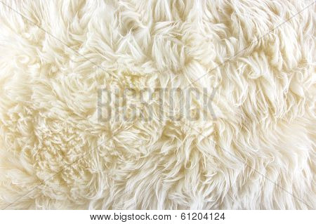 White Long Hair Fur Background