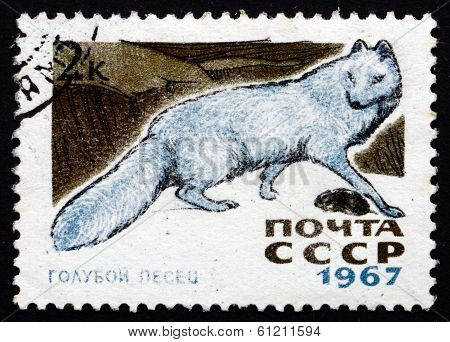 Postage Stamp Russia 1967 Arctic Blue Fox
