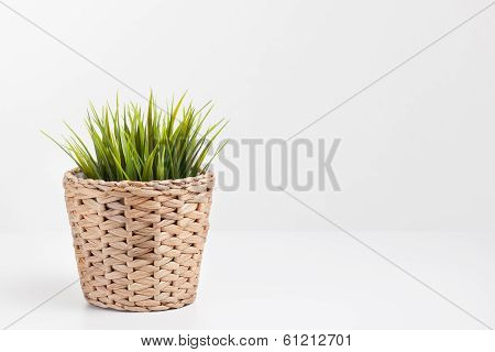 Green Plant In A Rattan Planter