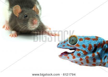 Rat And Lizard