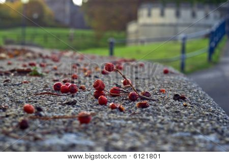 Fallen Fruit