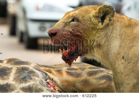 Bloody Lioness