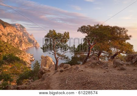 Evening landscape with beautiful sunshine. Pine forest on the rocks by the sea. Cape Aya, Crimea, Ukraine, Europe