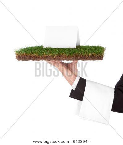 organische tray