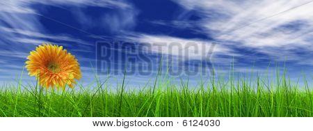 hohe Auflösung 3d Gras über ein blauer Himmel-banner