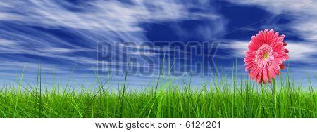 high resolution 3d green grass over a blue sky banner