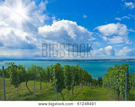 lakeside vineyard