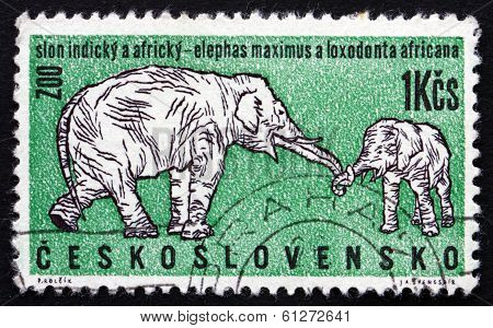 Postage Stamp Czechoslovakia 1962 African And Indian Elephants