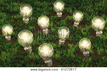 Cultivation Of Lit Light Bulbs