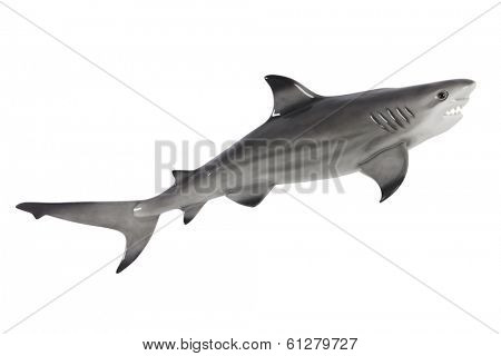 Plastic toy shark cut out, isolated on white background
