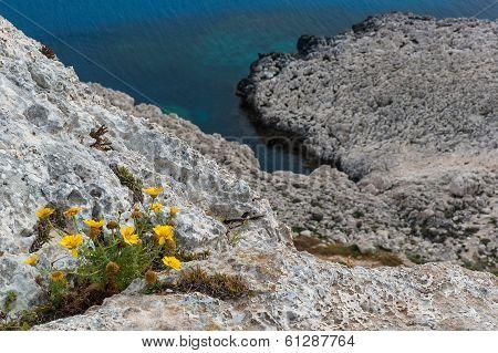 Wild Flowers On Cliffs