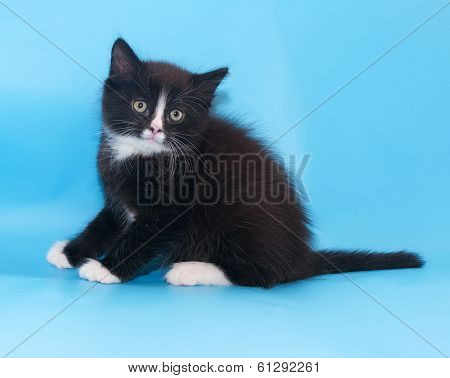 Black And White Fluffy Kitten Recoiled, Startled His Ears