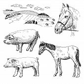 pic of horses eating  - pig and horse - JPG