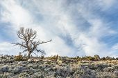 foto of sagebrush  - silhouette of a dead tree against field of sagebrush and rocks in North Park - JPG