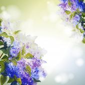 stock photo of lilac bush  - Lilac flowers background - JPG
