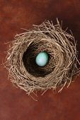 Bird's nest with single blue egg