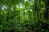 stock photo of tropical rainforest  - Tropical Rainforest Landscape - JPG