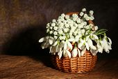 Beautiful snowdrops in basket, on brown background