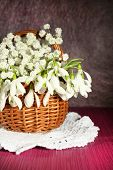 Beautiful snowdrops in basket on  purple table