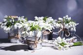 Beautiful snowdrops on grey background