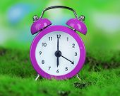 Purple alarm clock on grass on natural background