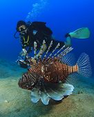 Lionfish and woman Scuba diver