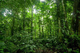 picture of incredible  - Tropical Rainforest Landscape - JPG