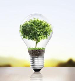 foto of photosynthesis  - Idea  - JPG