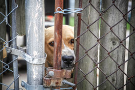 stock photo of animal cruelty  - Neglected dog behind fence - JPG