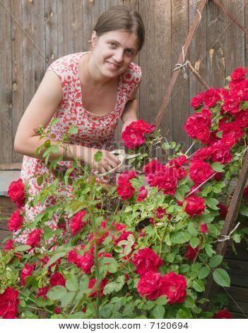 Trabajo de la mujer haciendo jardín cortando las rosas