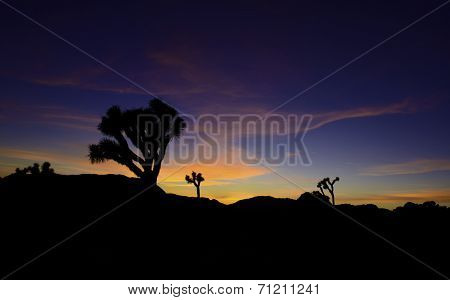 Sunrise in the Joshua Tree National Park, Southern California