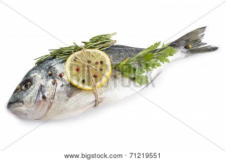 Gilt-head Bream Fish With Spices Isolated