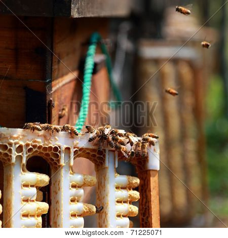 Beekeepers And Hives